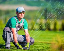 7 Easy Lawn Care Activities for Autumn