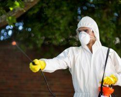 4 Benefits of a Pest Control Company