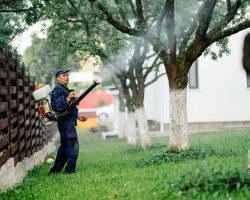 7 Pest Control Tips to Have a Great Summer