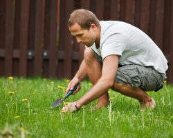 9 Things You Should Never Do To Your Lawn