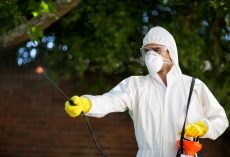 4 Benefits of a Pest Control Company